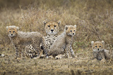 Cheetah Cubs and Mother, Ngorongoro, Tanzania Fotografisk tryk af Paul Souders