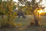 Rhinoceros in the Mosi-O-Tunya National Park Photographic Print by  Maremagnum
