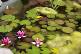 Smaller Plants Pond Photographic Print by Purple Queue