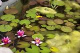 Smaller Plants Pond Photographic Print by Purple Queue