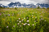 Wildflowers, Jasper National Park, Alberta, Canada Photographic Print by Mint Images/ Art Wolfe