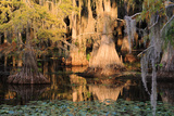 Cypress Swamp Reflections Photographic Print by  WarrenPrice