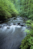 Forest Stream Photographic Print by Wallace Garrison