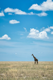 Giraffe in Etosha National Park Photographic Print by Peter Vruggink