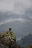 Adler Fotodruck von Enrique R. Aguirre Aves