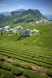 Tea Garden of Alishan Photographic Print by IMAGEMORE Co, Ltd.
