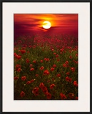Warm Sunset Framed Photographic Print by Marco Carmassi