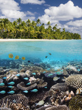 Tropical Paradise - the Maldives Photographic Print by Steve Allen