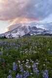 Mount Rainier Wildflower Sunset Photographic Print by Justin Reznick