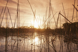 Everglades Swamp at Sunset Photographic Print by Buena Vista Images