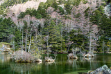 Myojin Pond Photographic Print