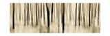 Mystic Forest 1252 Panoramic Fotoprint van Rica Belna