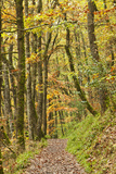 A Footpath through Whiddon Wood by the River Teign Photographic Print by Alex Hare