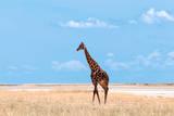 Male Giraffe in Etosha Photographic Print by Peter Vruggink
