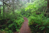 Footpath through Quinault Rainforest Photographic Print by Martin Ruegner