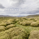 Pre-Andean Shrub Land. Photographic Print by David Madison