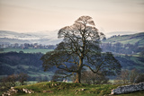 Lone Tree and Snow Scene in Peak District Photographic Print by  Nuzulu