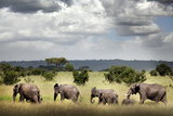 Family of Elephants at Ruaha National Park Photographic Print by  JoSon