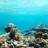 Koralowiec Reprodukcja zdjęcia autor Jannes Glas