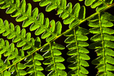 Detail of Fern, near Simonside, Northumberland National Park, England Photographic Print by Jason Friend