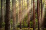 Sunlight through Forest Papier Photo par Rudolf Vlcek