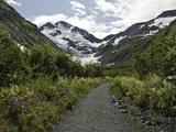 Byron Glacier Trail Photographic Print by Kim Hojnacki