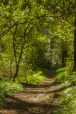 Nature Trail in Spring Photographic Print by Jerry Whaley