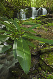 Waterfalls, Rhododendron Creek Photographic Print by Jerry Whaley