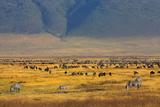Ngorongoro Crater Tanzania Photographic Print by Vladimir Nardin
