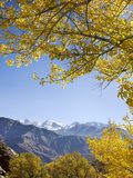 Aspen Trees (Populous Spinos) and Mountain Photographic Print by  JoSon
