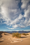 Mesquite Dunes Photographic Print by Alice Cahill