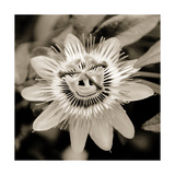 Blooming Flowers 5664 Photographic Print by Rica Belna