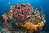 Coral Head with Sponge and Soft Coral Photographic Print by Jones/Shimlock-Secret Sea Visions