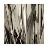 Grass and Reeds Photographic Print by Rica Belna
