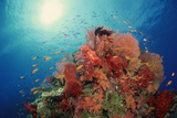 Reef Scenic of Hard Corals , Soft Corals and Tropical Fish , South Pacific Lámina fotográfica por  Comstock