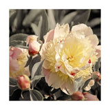Blooming Flowers 5670 Photographic Print by Rica Belna