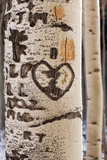 Usa, Colorado, Close-Up of Aspen Tree Trunk with Carved Heart Photographic Print by John Kelly
