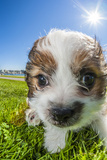 Cute Dog with Sunburst and Flare Photographic Print by Stuart Dee