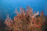 Reefscape Reprodukcja zdjęcia autor Luis Javier Sandoval