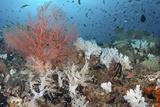 Reef Scenic Showing 'Bleached' Soft Corals Reprodukcja zdjęcia autor Jones/Shimlock-Secret Sea Visions