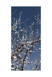 Flowering Branches Photographic Print by Rica Belna