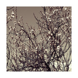 Flowering Branches 5756 Photographic Print by Rica Belna