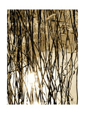 Reeds 8167 Photographic Print by Rica Belna
