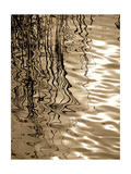 Reeds 8166 Photographic Print by Rica Belna