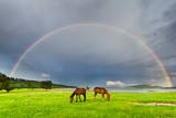 Horses under Rainbow Photographic Print by Evgeni Dinev Photography