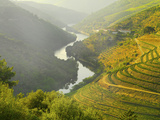 Portugal, Douro, Terraced Vineyards Photographic Print by Shaun Egan