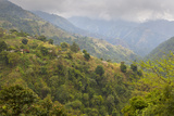Blue Mountain Landscape, Jamaica Photographic Print by Doug Pearson