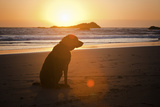 Dog at Beach Photographic Print by Christopher Kimmel