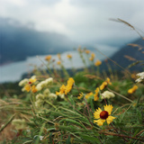 Wildflowers on Hill above River Gorge Photographic Print by Danielle D. Hughson