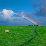 Grazing Sheep beneath Rainbow Photographic Print by Peter Femto